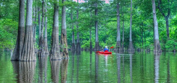 La carte interactive du bayou aide les visiteurs à explorer le cours d'eau en canot, en kayak ou en bateau.
