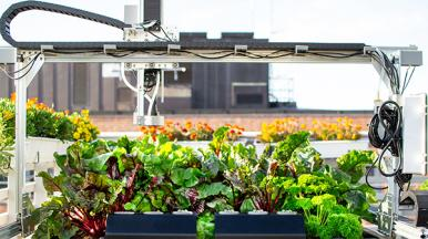 USING TECHNOLOGY TO OPTIMIZE URBAN FARMING