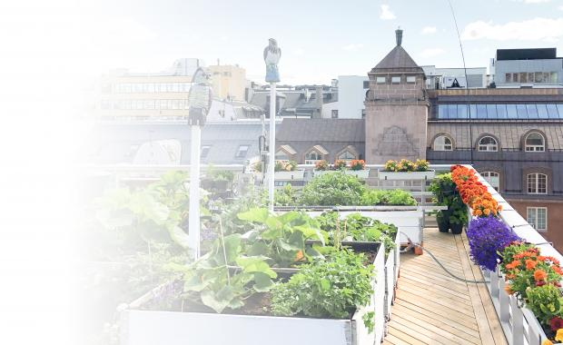 Urban Farm Lab Roof Top Farm Oslo