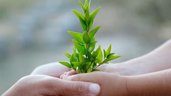 child and adult hands holding small green plant
