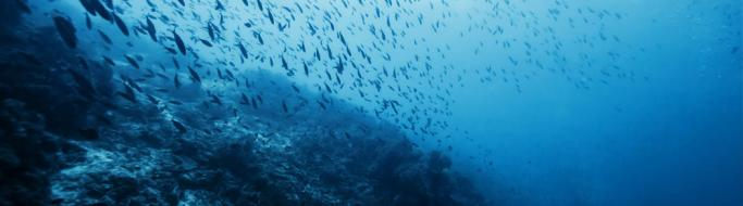 Shoal of fish in ocean